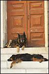 photo La sieste des chiens