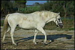 photo Le cheval de Camargue