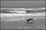 photo Un oiseau à la Mer du Nord