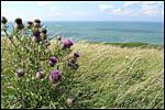 photo La Manche