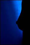 photo Silhouette d'un sein