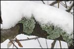 photo Le lichen