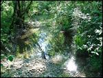 photo Ruisseau dans les sous-bois