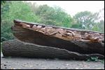 photo Tronc d'arbre sculpté dans le zoo de Lille