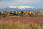 photo Trouillas au pied du Canigou