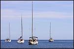 photo Les petits voiliers