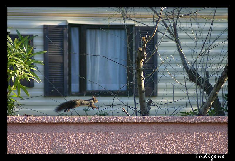 Le bond de l'écureuil