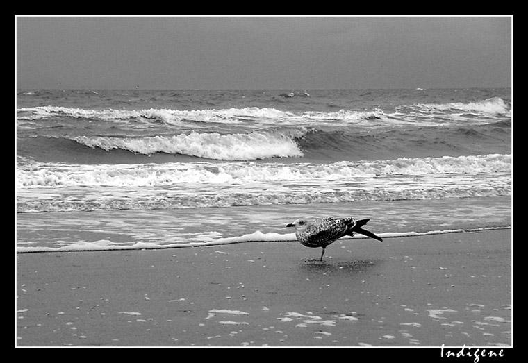 Un oiseau à la Mer du Nord