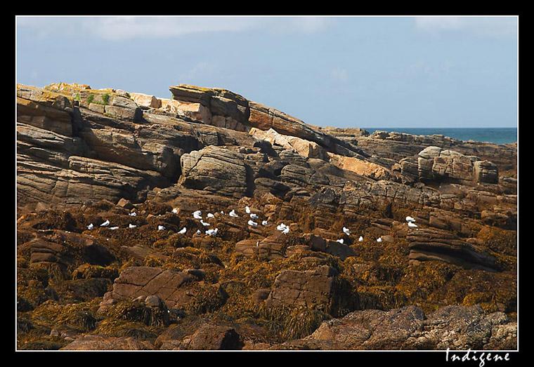 Les colonies d'oiseaux