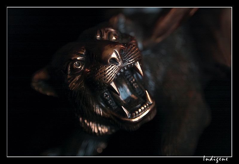 Les crocs du tigre
