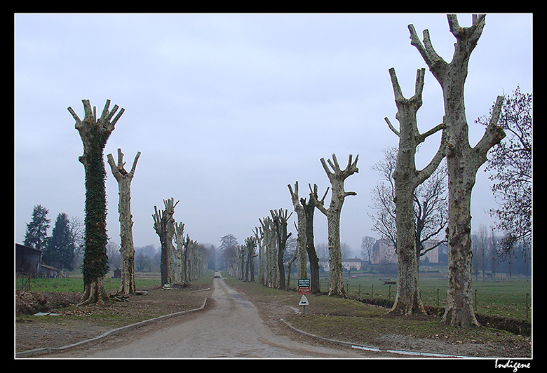 Elagage des arbres