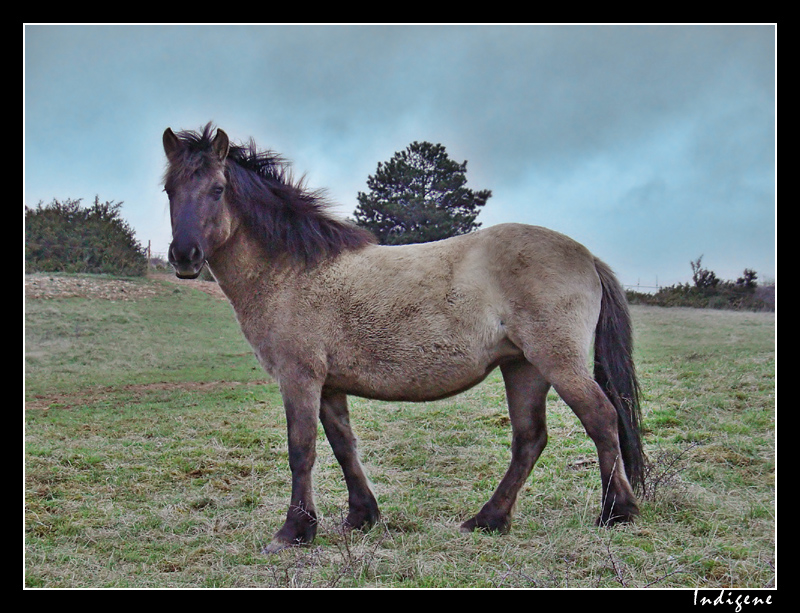 Le cheval de Solutré