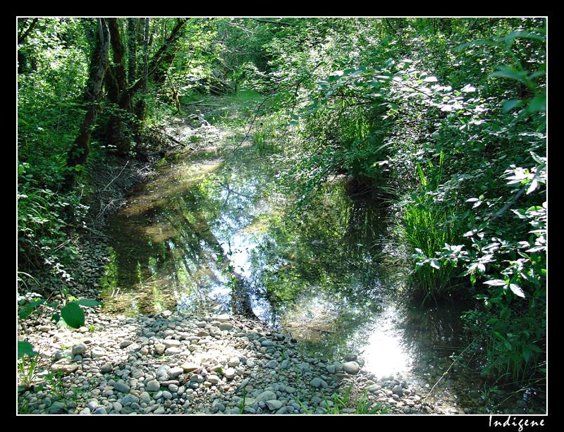Ruisseau dans les sous-bois
